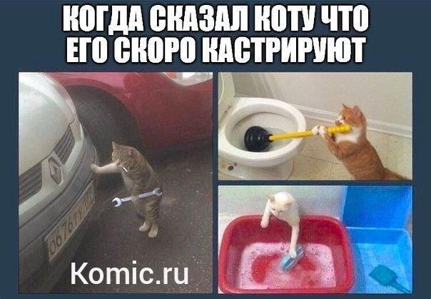 Кот домохозяин😂
